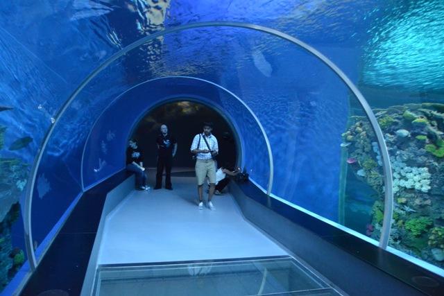 National Aquarium Denmark, Den Blå Planet, Copenhagen. Tours of Copenhagen – school trips, family trips – Hit The Road Travel