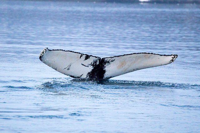 Obserwacje wielorybów. Wycieczka naLofoty, Hit The Road Travel