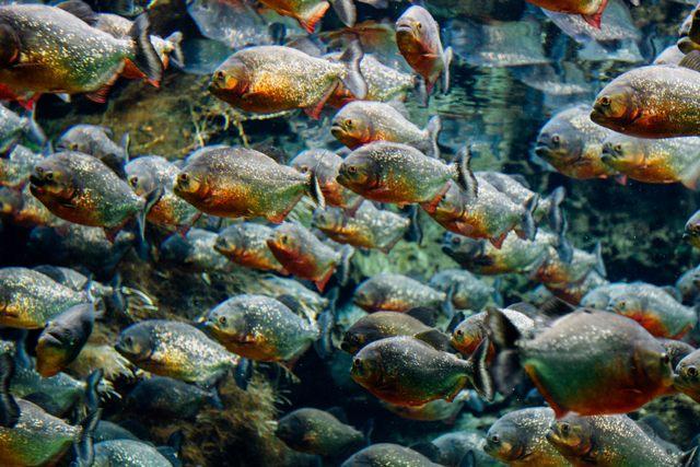Den Blå Planet - Akwarium wKopenhadze. Wycieczki szkolne zagraniczne – Hit The Road Travel