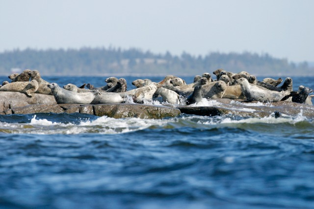Seal watching, Sweden. Sweden tours, Baltic cruises to Sweden – Hit The Road Travel