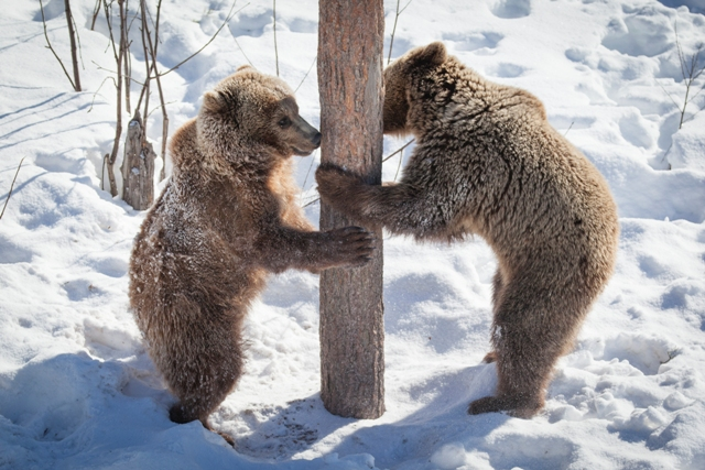 Ranua Zoo, Finland. Santa Claus trips