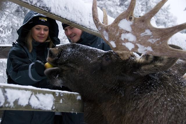 Ranua Wildlife Park, Finland. Santa Claus trips