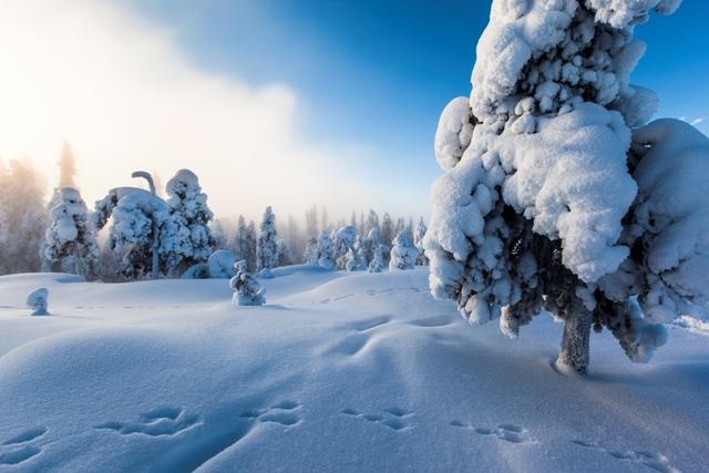 Winter in Finnish Lapland. Santa Claus trips, Rovaniemi tours