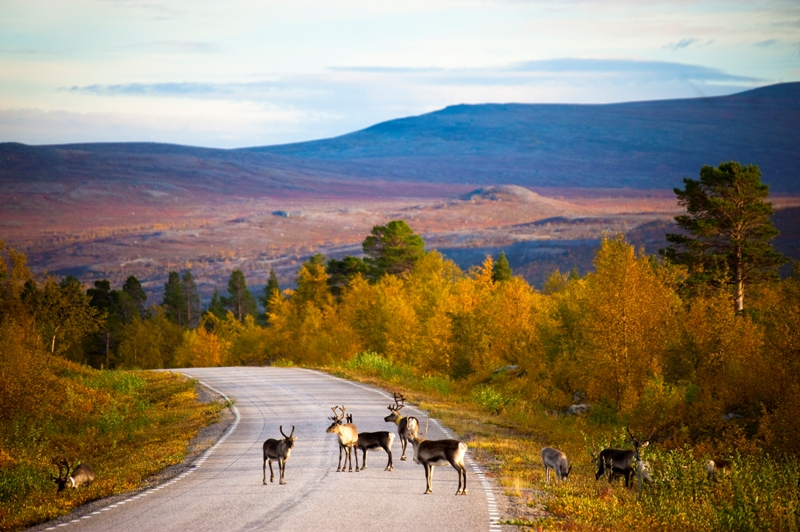 Lapland in Finland. Trips to Lapland, tours of Finnish Lapland – Hit The Road Travel