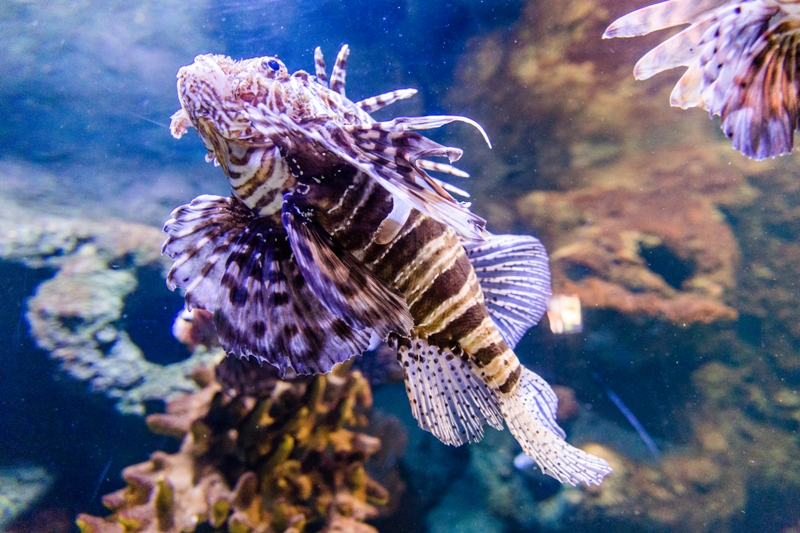 Sea Life, Helsinki. School trips to Finland – Hit The Road Travel