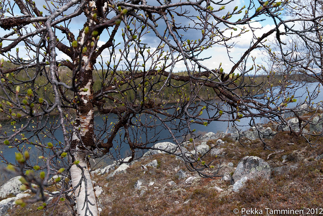 The Juutuanjoki River, Finland. Trips to Lapland, tours of Finnish Lapland – Hit The Road Travel