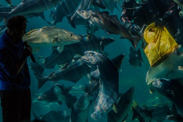 Ålesund, Akwarium – Park Atlantycki. Wycieczka doNorwegii, Hit The Road Travel